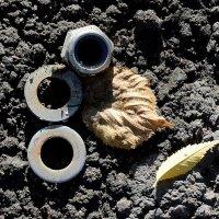 Метизы и листья :: Асылбек Айманов
