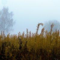 из серии Осенне-туманное :: Любовь