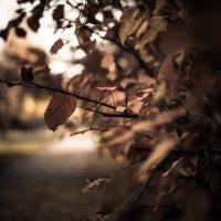 Настроение осень :: Евгений Джон
