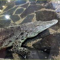 Крокодил Тотоша :: Вера