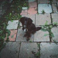 Верный,не пёс, а друг. :: Света Кондрашова
