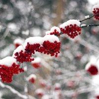 Первый снег :: Евгений Ярдов