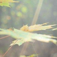 Leavs :: Chapora Sun