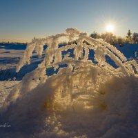 В каждом рисунке солнце :: Yuri Mekhonoshin