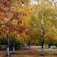 Осень :: Татьяна Пальчикова