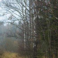 Утро туманное... :: .civettina ...