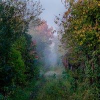 Осенний туман :: Вера