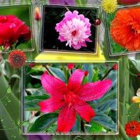 Цветущие лето :: Светлана