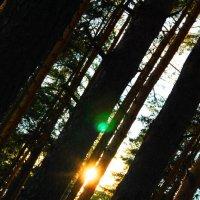 Вечер лета... Спокойствие в лесу :: Druma Bassters