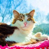 Никак не могу набраться храбрости и рассказать моему коту, что это он у меня живет, а не я у него!!! :: Наталья Александрова