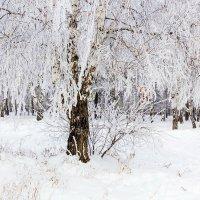 Утренний иней :: Анатолий Иргл