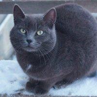Зимний котэ! :: A. SMIRNOV