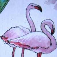 Фламинго :: Лебедев Виктор
