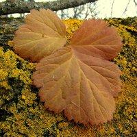 Осенний лист. :: nadyasilyuk Вознюк