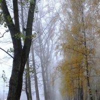 Осенняя дымка :: Андрей Михайлин