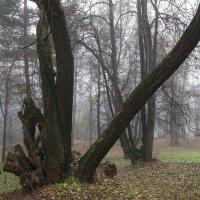 Сказочный лес :: Андрей Михайлин