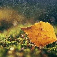 Осенний романс :: Владлена Лапшина