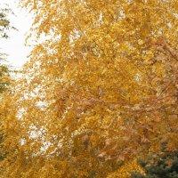 Осень в городском дворе :: Дмитрий Максимовский