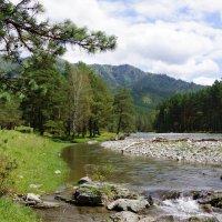 Река Чемал-Горный Алтай :: Наталия Григорьева