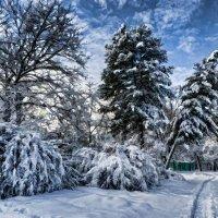 Зима в парке Сокольники. :: Василий Ярославцев