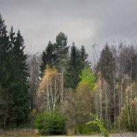 Осень у дороги :: Юрий