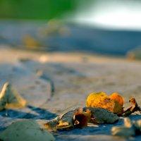 Последние листья :: Дмитрий С.