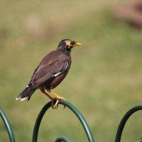 птица :: maikl falkon