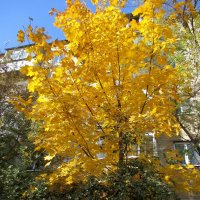 Золотая осень :: Нина Бутко