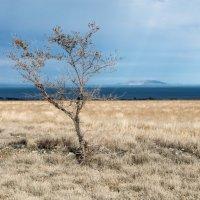 остров :: Dmitriy Sagurov