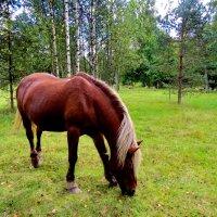 Лошадь ,природы созданье чудесное... :: Светлана