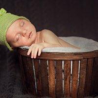 Мишутка, 3 недели :: Устинья Онищук