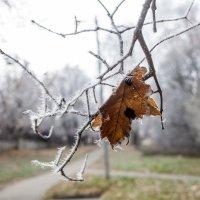 Осенний мороз :: Андрей Михайлин