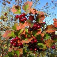 Осенних красок карнавал. :: nadyasilyuk Вознюк
