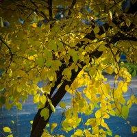 Золото природы :: Игорь Герман