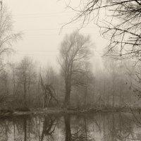 Туман :: Геннадий Хоркин