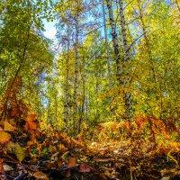 В золотом убранстве лес осенний снова... :: Rafael
