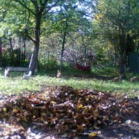 Осень :: Аверьянов Александр