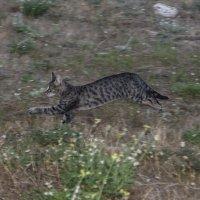 Кот в погоне :: Юлия