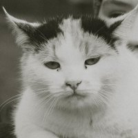 Уличный кот :: Алёна Нетесова