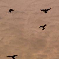 птицы :: Александр Прокудин