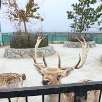 Тайган парк :: Натали Сочивко