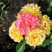 Розовая в жёлтом :: Дмитрий Никитин