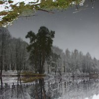 Отражение как в зеркале! :: Полина Липина