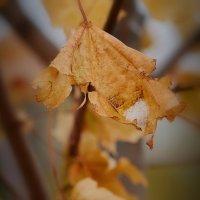 Последние листья :: Валерий Лазарев