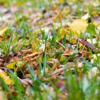 Ковёр из листьев и травы :: Юлия