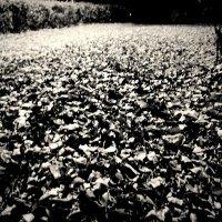 мерцание  листьев :: Дмитрий Потапов