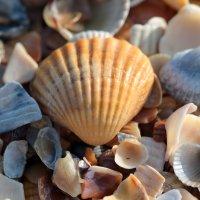 Осень...море :: Елена Lee