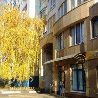 Осенняя береза :: Serg
