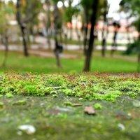 Парк Гюльхане в Стамбуле :: Денис Кораблёв