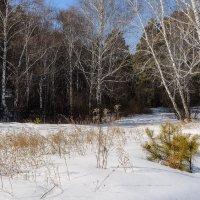 Март. Прогулки по лесу. :: Евгений Герасименко